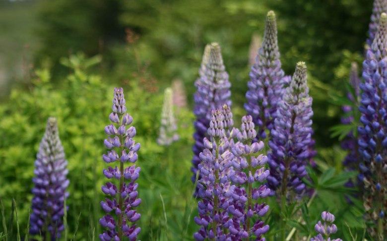 ечебные травы для иммунитета