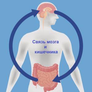 Связь мозга и кишечника