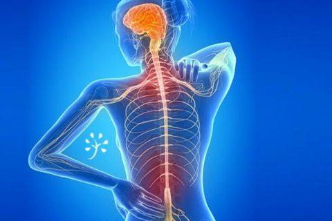 Вагус блуждающий нерв